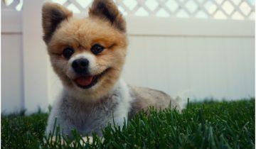 dog_truf
